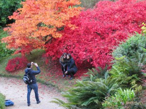 Fotosession vor japanischem Ahorn