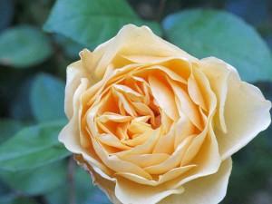 Rosen von Powerscout