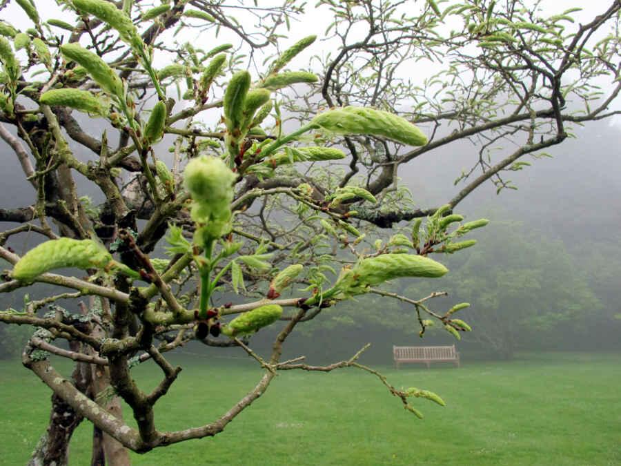 Jardins du Bois des Moutiers 16 - vonREISENundGAERTEN