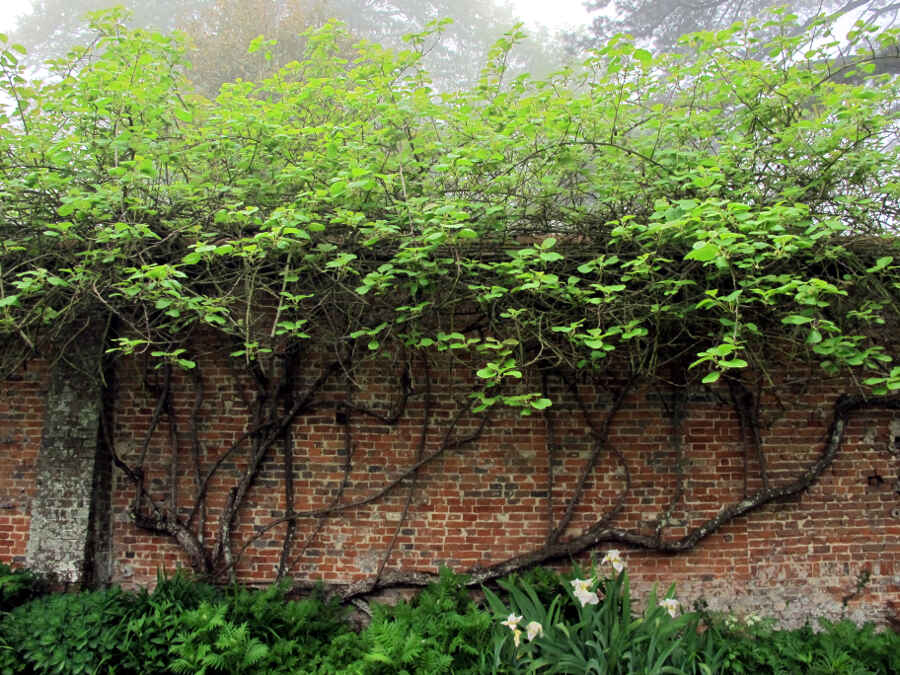FRANKREICH: Bois des Moutiers – Wim Wenders Musen-Garten ...