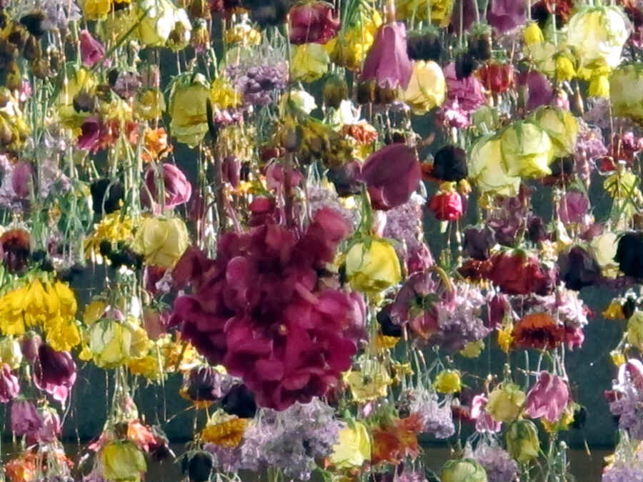Interview Blumenkünstlerin Rebecca Louise Law Vonreisenundgaerten