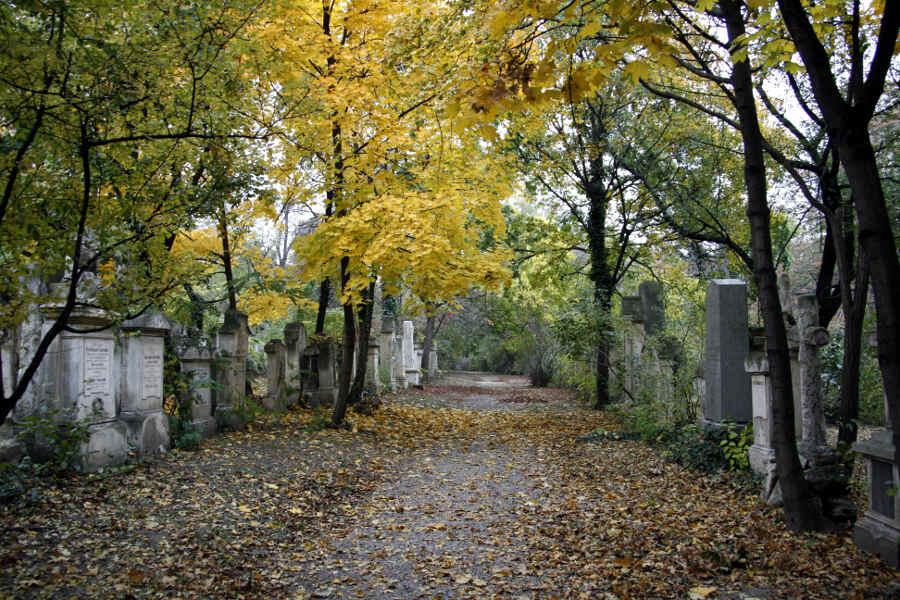 Foto eines Weges auf einem Wiener Friedhof