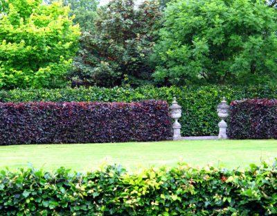 IRLAND: Tolle Gärtner in Cork: Glenview Gardens – David & Mary Tanner