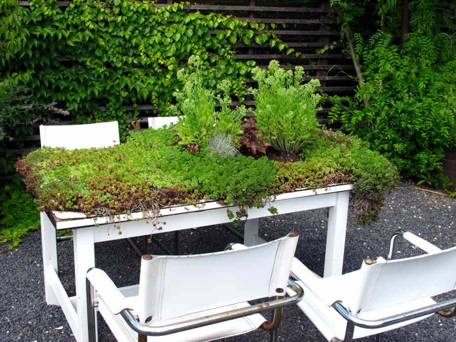 Foto eines Tisches mit vier Stühlen, auf dem grüne Pflanzen wachsen