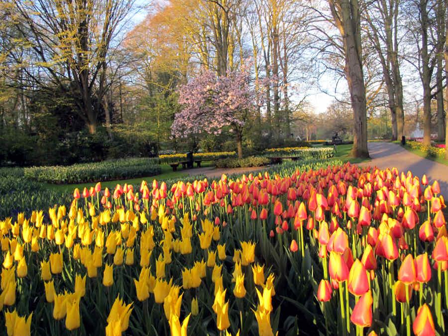 Tulpenvielfalt auf dem holländischen Keukenhof