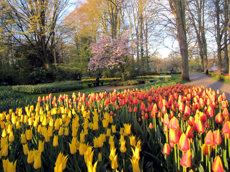 Interieur Hollandse Tulpen : Holland tulpen design im keukenhof vonreisenundgaerten