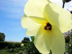 Foto einer gelben Blüte
