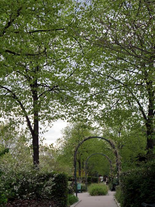 Gartenweg durch Pflanzen.
