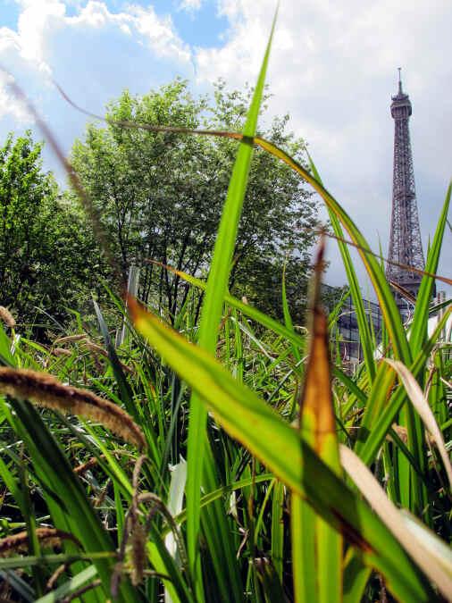 Eiffeltum mit Gäsern im Vordergrund