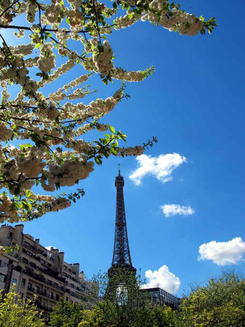 Eiffelturm mit blühenden Bäumen