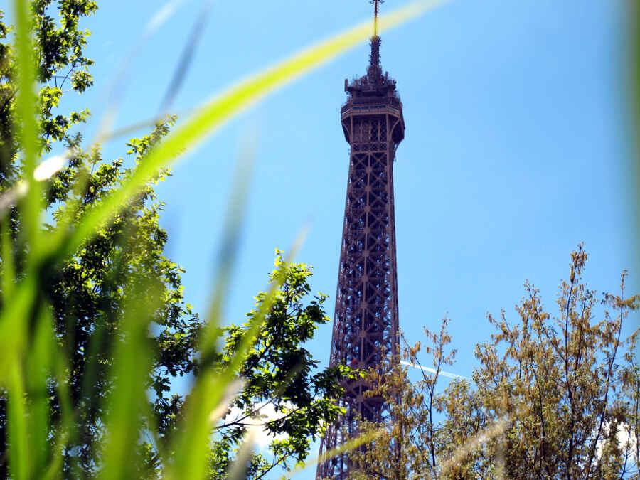Eiffelturm mit Gräsern und Büschen