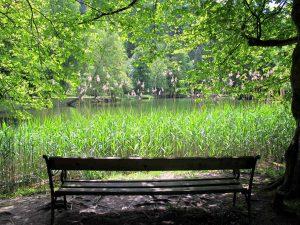 Foto von Parkbank von hinten mit Blick auf einen See