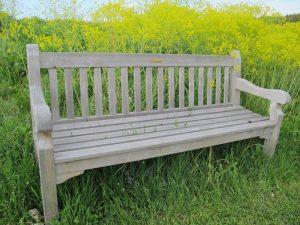 Foto einer Holzbank vor gelben Rapspflanzen
