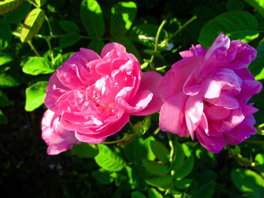 Duft-Gärten bei der Parfumstadt Grasse in der Provence