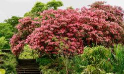 Gärten in Wales Gardens of Wales vonREISENundGAERTEN ©DDAVID