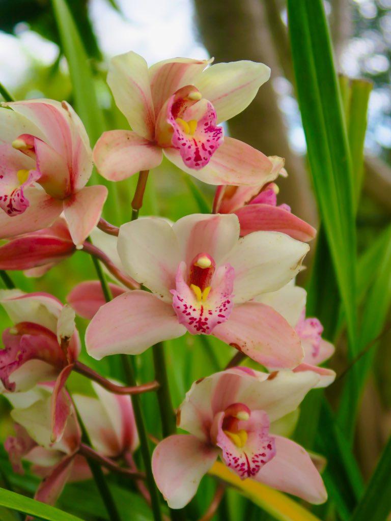 Orchideenblüten ©DDAVID